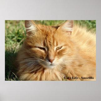 La vida del gato - el dormir de Amarillo Póster