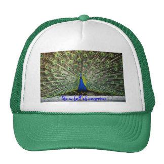 La vida del gorra del pavo real es llena de sorpre