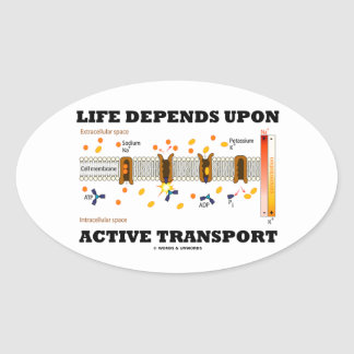 La vida depende del transporte activo (la bomba pegatina ovalada
