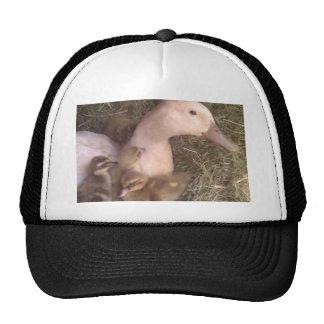 La vida es apenas ducky gorra