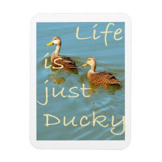 La vida es apenas imán abigarrado Ducky de los pat