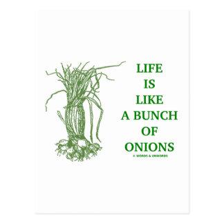 La vida es como un manojo de las cebollas (la mate postal