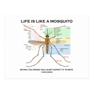 La vida es como un mosquito que le muerde cuando postal