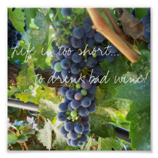 ¡La vida es demasiado corta… beber el mún vino! Póster