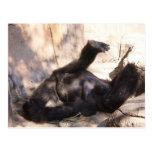 La vida es postal áspera del gorila