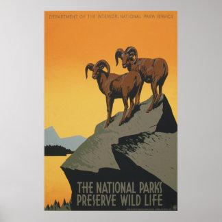 La vida salvaje del coto de los parques nacionales posters