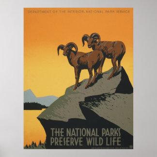 La vida salvaje del coto de los parques nacionales póster