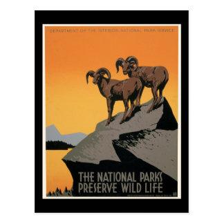 La vida salvaje del coto de los parques nacionales tarjeta postal
