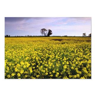 la violación amarilla coloca, Cambs, flores de Anuncio Personalizado