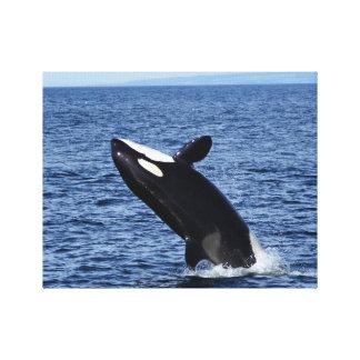 La violación de la orca (orca) envolvió la impresi impresion en lona