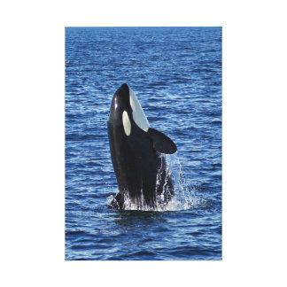 La violación de la orca (orca) envolvió la impresi impresiones en lienzo estiradas
