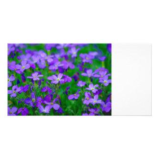 La violeta florece la tarjeta de la foto tarjetas personales