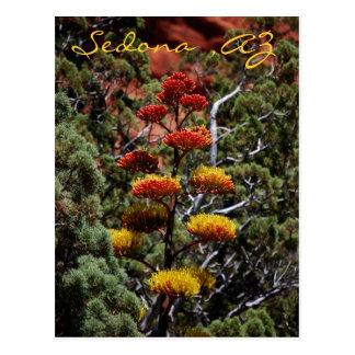 La yuca florece la postal