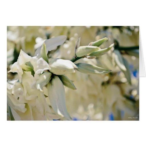 """La """"yuca florece"""" tarjeta de condolencia"""