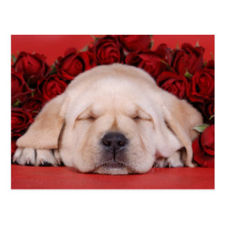 Lab and roses postcard