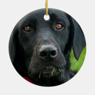 Lab Grass for Lunch Black Lab Ornament