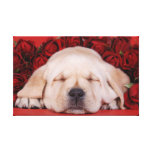 Lab love stretched canvas print