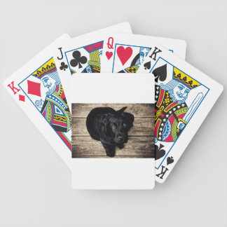 lab puppy bicycle playing cards