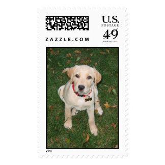 Lab Puppy Postage