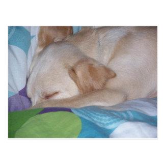 Lab puppy sleeping postcard