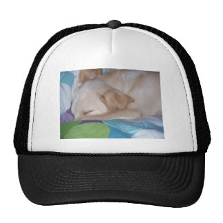 Lab puppy sleeping trucker hat