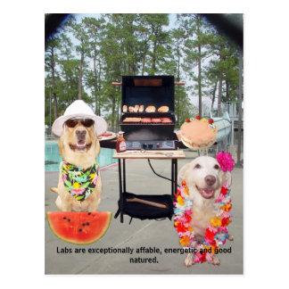 Lab Traits - Affable & Good Natured Postcard