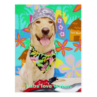 Lab Traits - Love Water Postcard