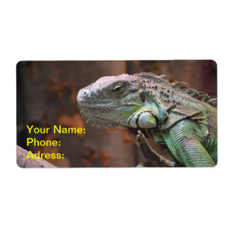Label with colourful Iguana Lizard