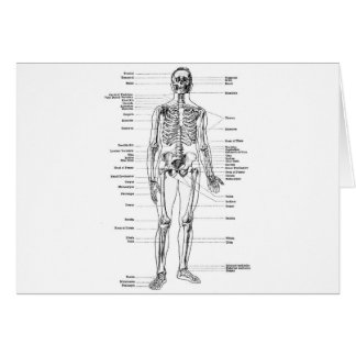 Labeled Skeleton Diagram Card