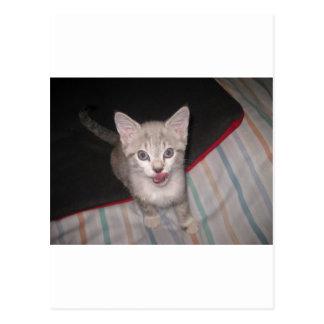 Labios de Lickin del gatito Postales