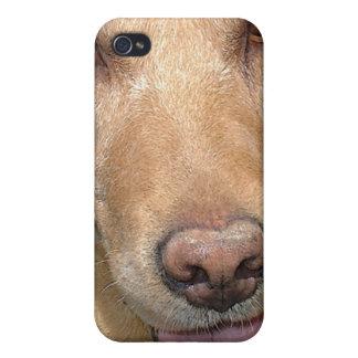Laboratorio amarillo Iphone iPhone 4/4S Carcasa