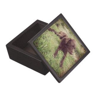 Laboratorio del chocolate que miente en fotografía caja de regalo de calidad