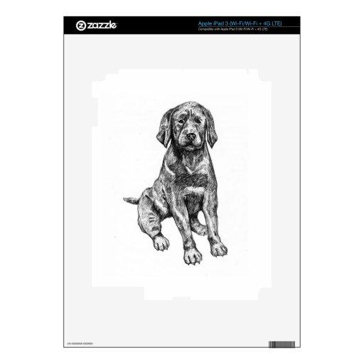 Laboratorio negro del perrito iPad 3 skins