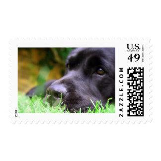 laboratorio negro timbre postal