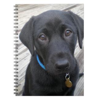 Laboratorios lindos note book