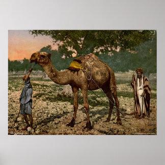 Laborers, Plain of Esdraelon, Holy Land Poster