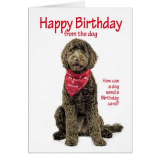 Labradoodle Birthday Card