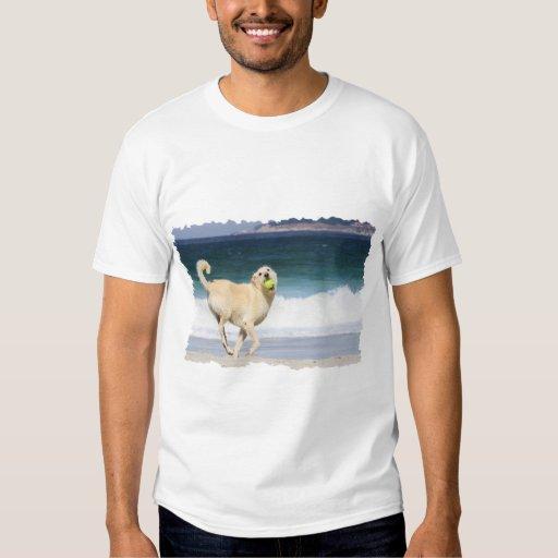 Labradoodle - día feliz en la playa remera