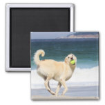 Labradoodle Happy Day on the Beach Magnet
