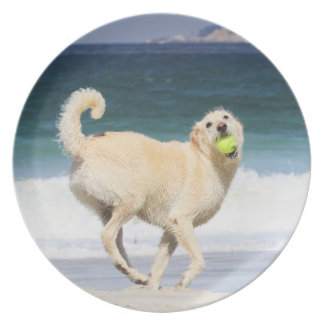 Labradoodle - Happy Day on the Beach Plates