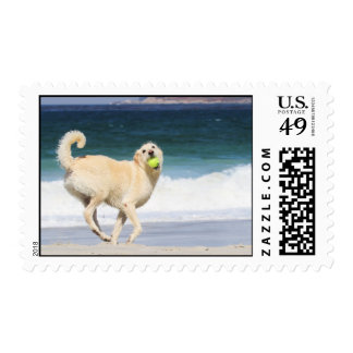 Labradoodle Happy Day on the Beach Postage