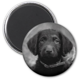 Labradoodle in B&W Badge 2 Inch Round Magnet