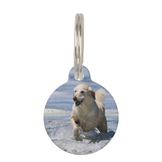 Labradoodle - Izzy Identificador Para Mascota