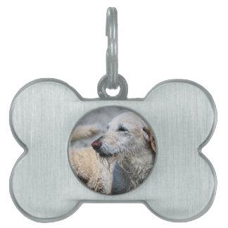Labradoodle - Izzy Placa De Mascota
