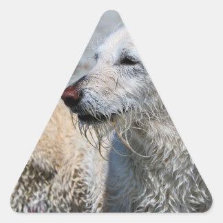 Labradoodle - Izzy Triangle Sticker