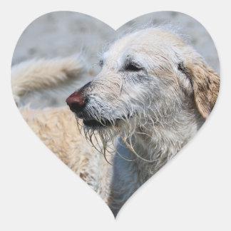 Labradoodle - Izzy Heart Sticker