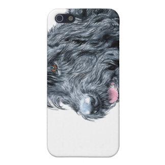 Labradoodle negro iPhone 5 carcasas
