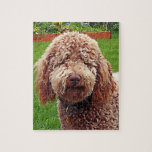 """Labradoodle &quot;Stella&quot; Puzzle<br><div class=""""desc"""">Beautiful curly and really hard puzzle! All those curls! Original painted photograph.</div>"""