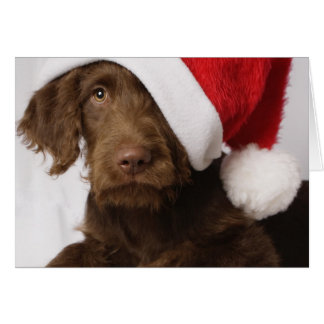 Labradoodle wearing a Santa hat Card