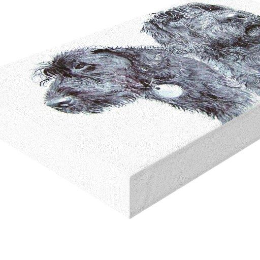 Labradoodles negro impresión en lienzo estirada